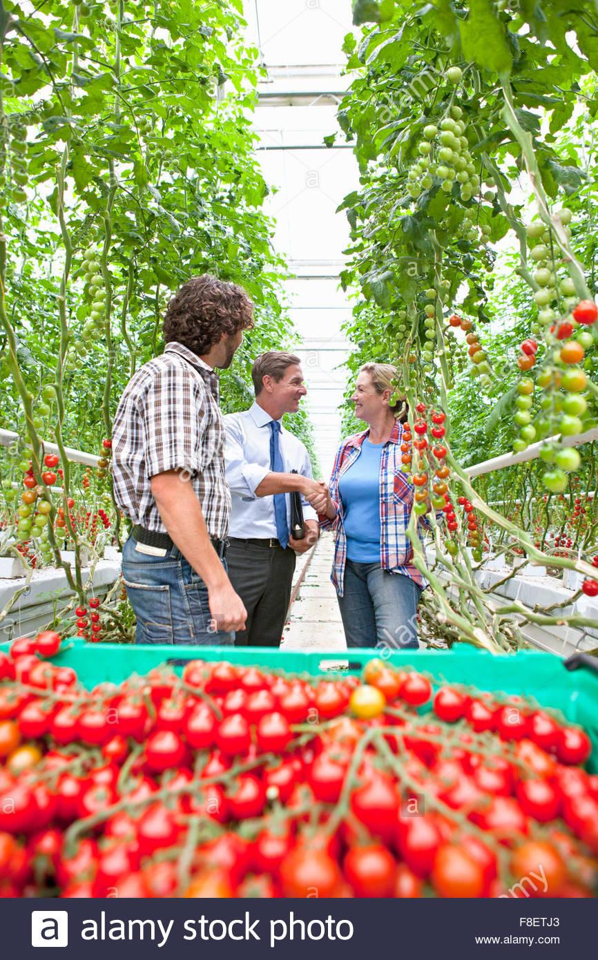 Homme d'affaires et d'producteur derrière tomates rouges mûres des émissions Photo Stock