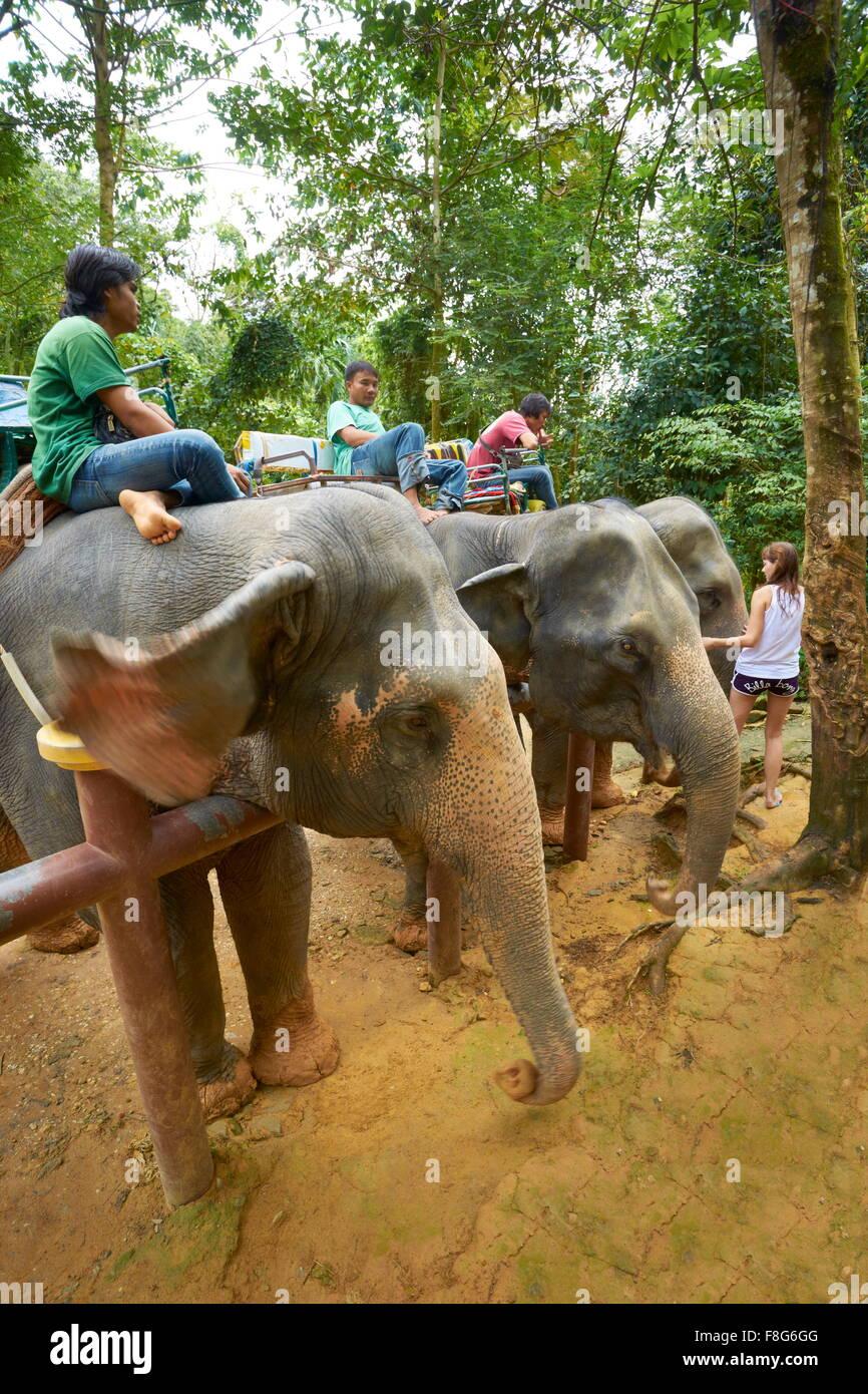 Thaïlande - province de Krabi, le parc national de Khao Lak, éléphant attendent les touristes Banque D'Images