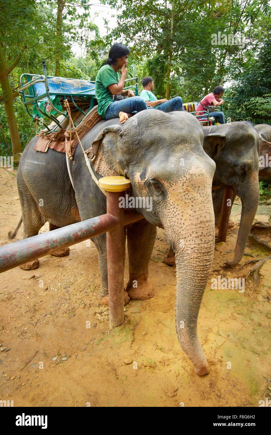 Thaïlande - Parc national de Khao Lak, éléphant attendent les touristes Banque D'Images