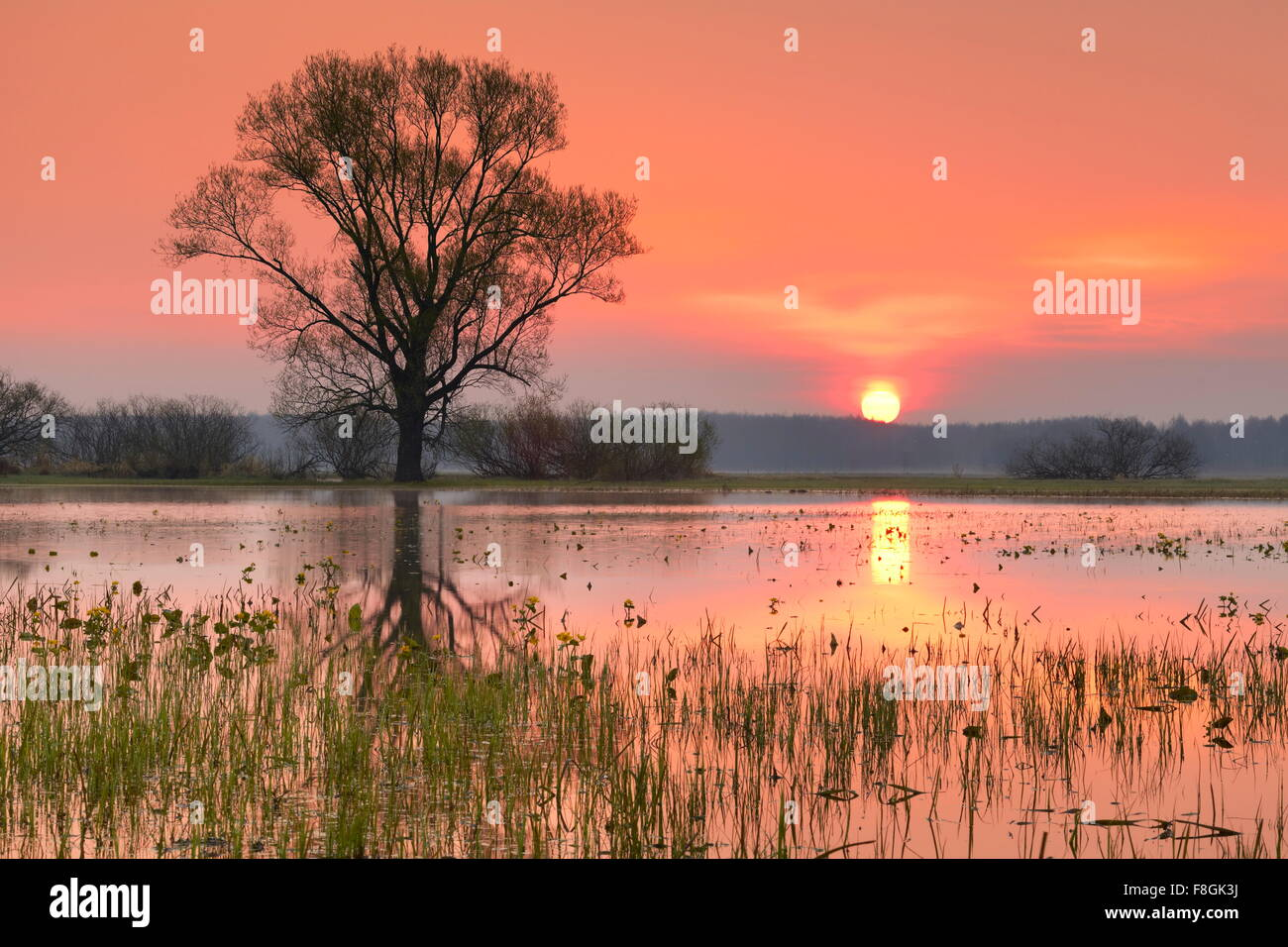 Lever du soleil paysage, parc national de Biebrza, Pologne Photo Stock