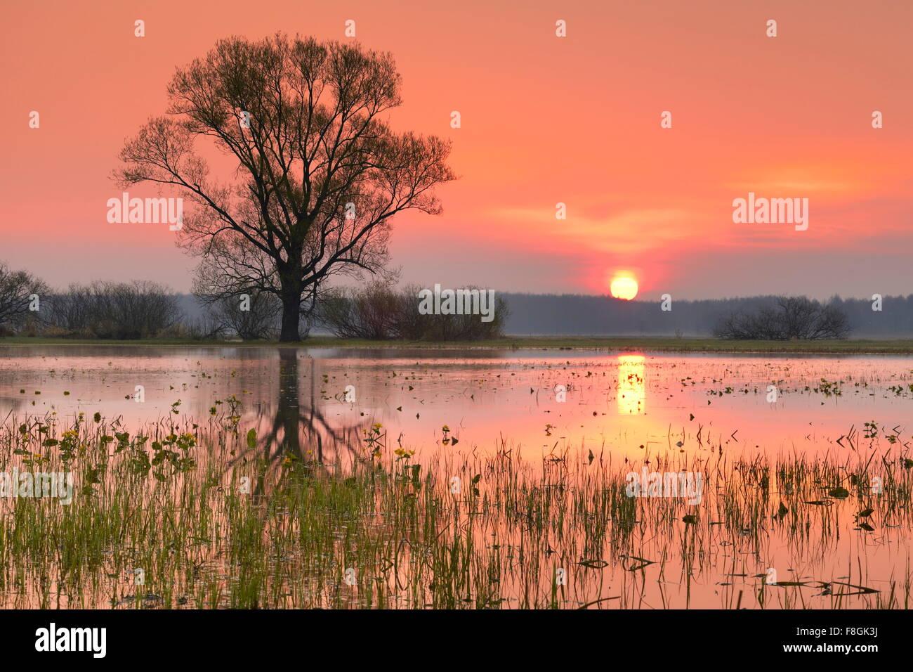 Lever du soleil paysage, parc national de Biebrza, Pologne Banque D'Images