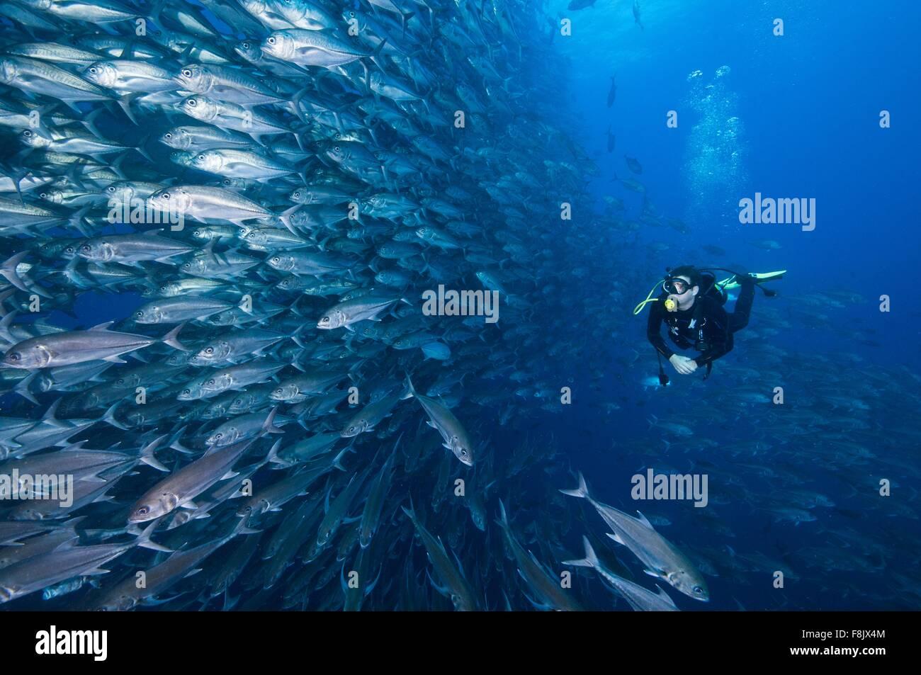 Plongée sous marine natation mur passé de valets, Cocos Island, Costa Rica Photo Stock