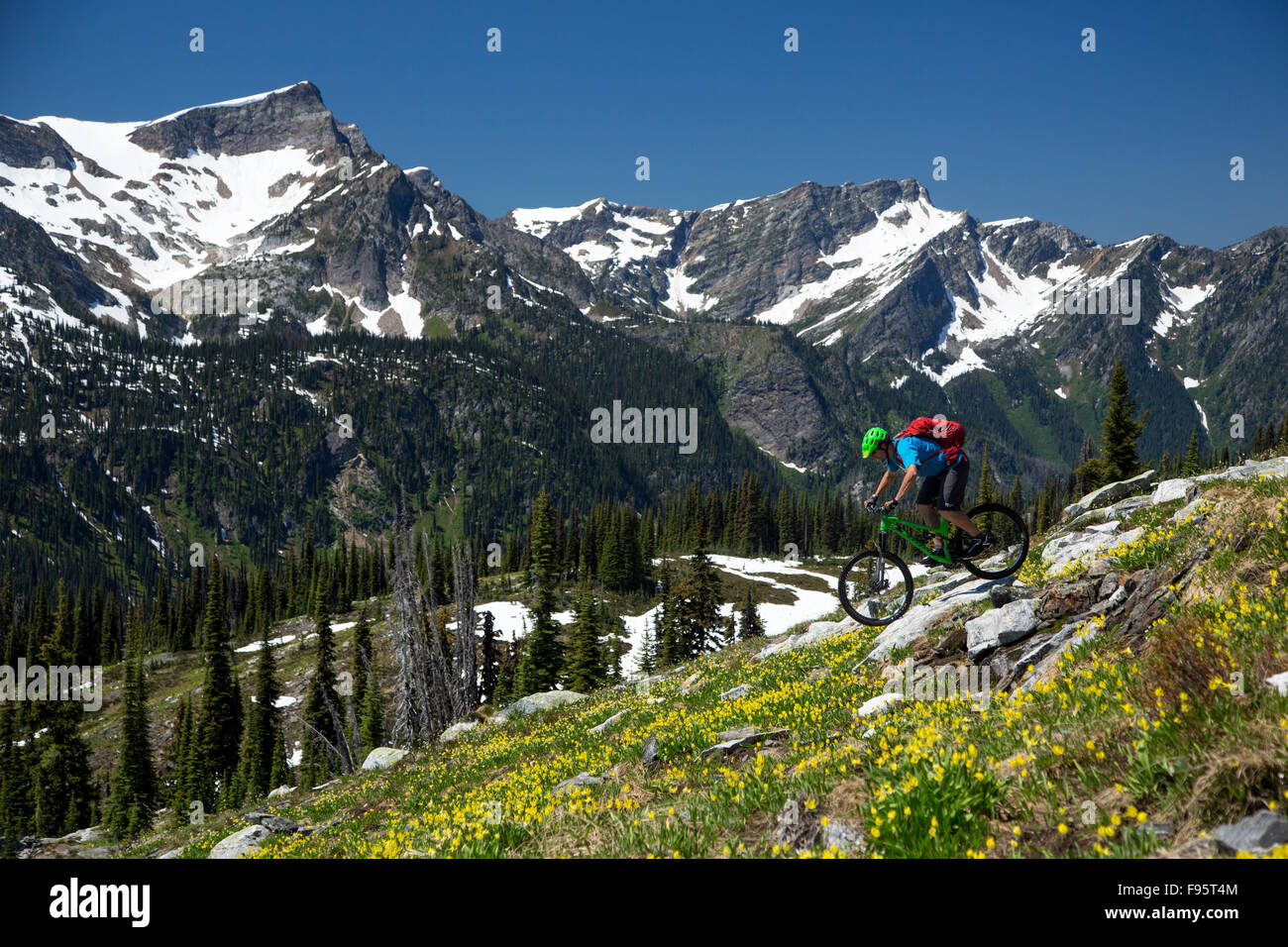 Le vélo de montagne, Glacier, Lily Erythronium grandiflorum, Sol Mountain Lodge, montagnes Monashee, Revelstoke Photo Stock