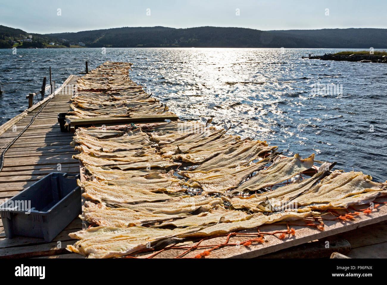 Cod des séchoirs, Heart's Content, Newfoundland, Canada Photo Stock