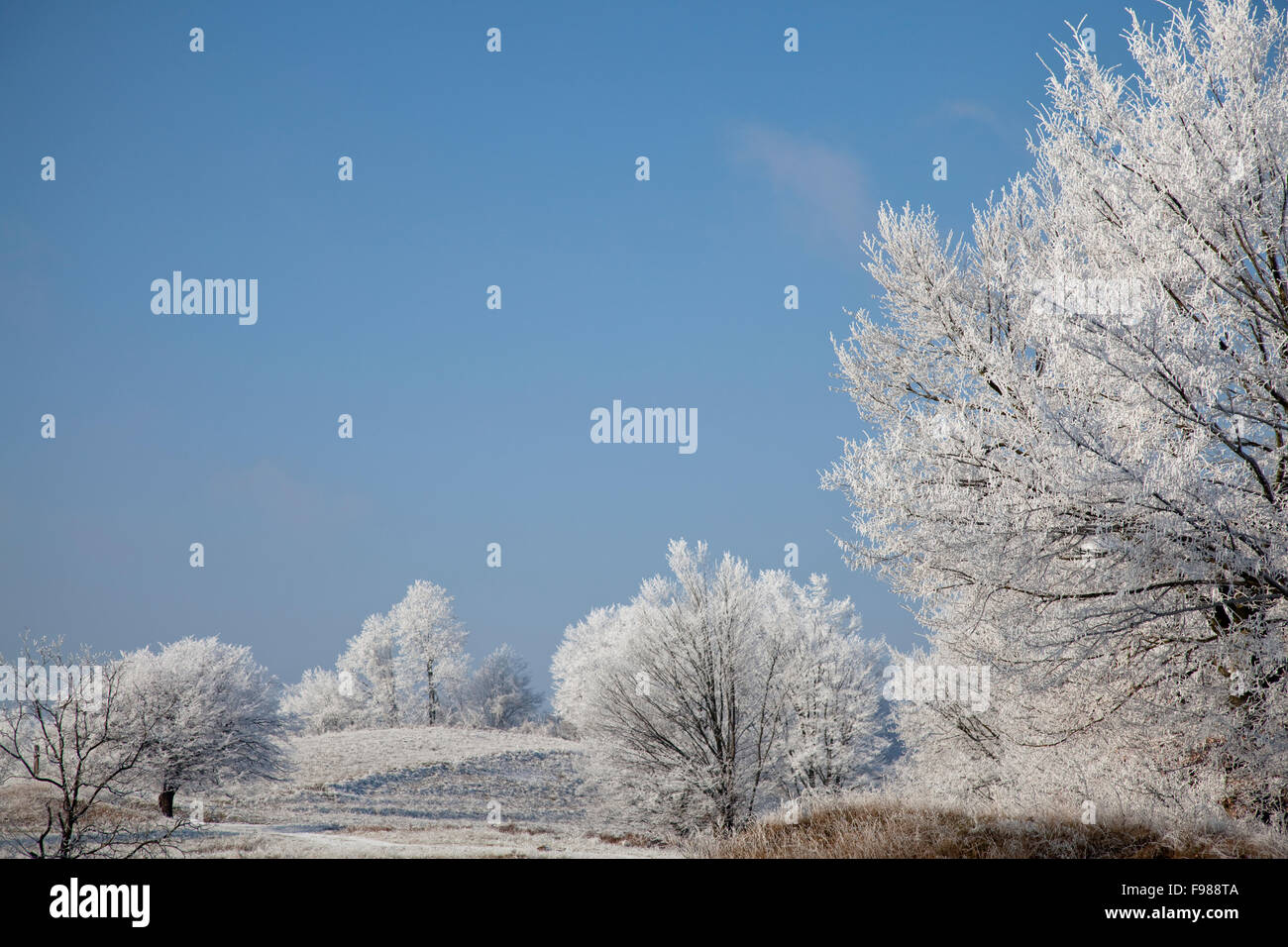 Paysage d'hiver Photo Stock