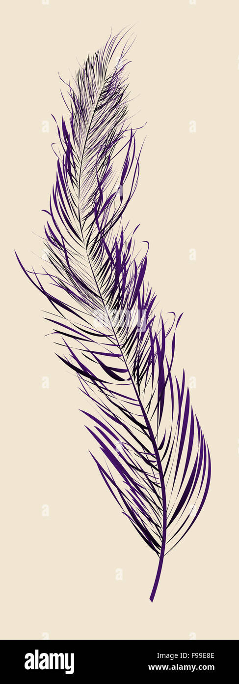 Plume violette Photo Stock