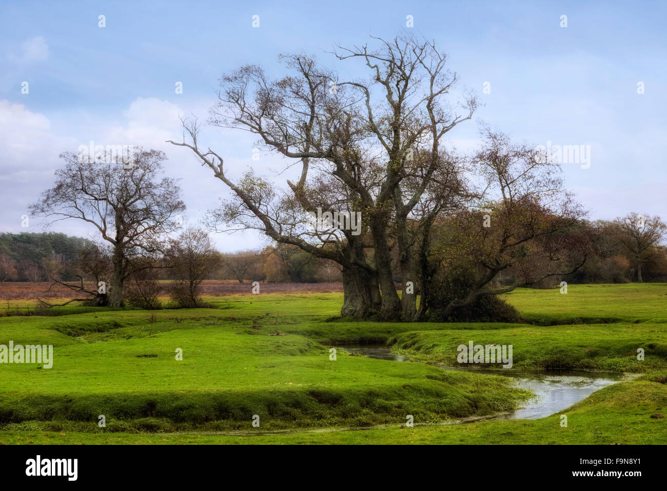 Longwater Lawn, New Forest, Lyndhurst, Hampshire, England, UK Photo Stock
