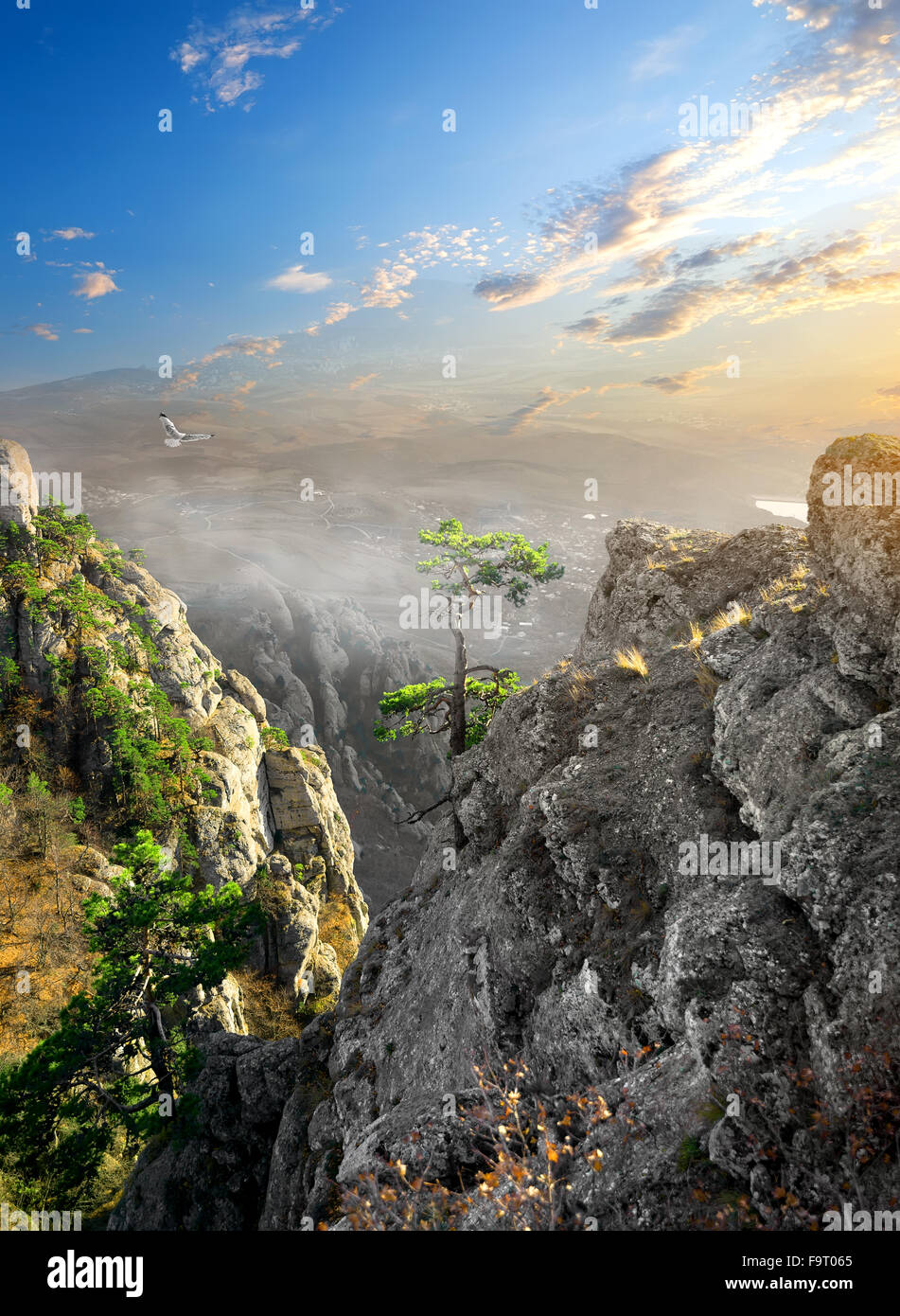 Plus d'oiseaux dans le brouillard montagne canyon au lever du soleil Photo Stock