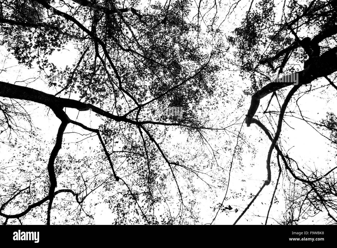 Les Veines de la Nature Photo Stock