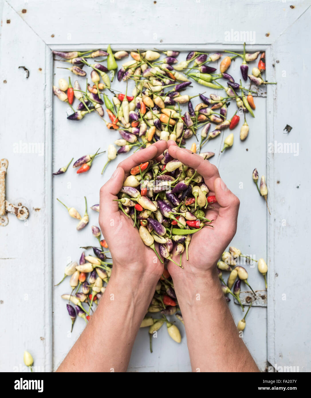 Les mains de l'homme garder chaude poignée de petits piments turc, vue du dessus Photo Stock