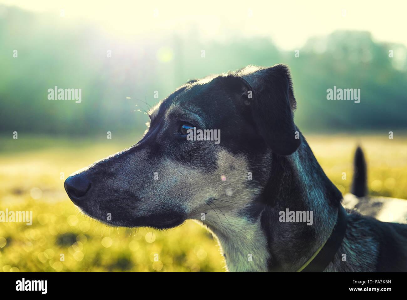 Portrait de chien avec fond flou lumineux Photo Stock