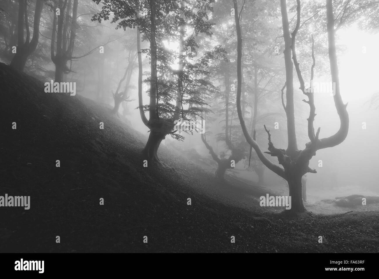 Creepy mystérieuse forêt en noir et blanc Photo Stock