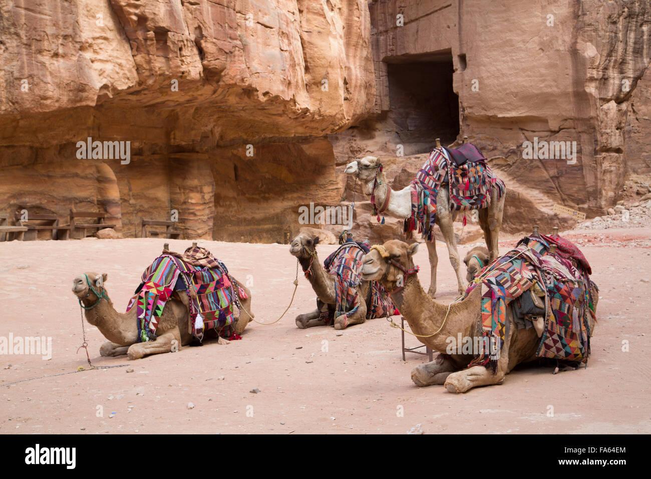 Des chameaux dans la zone du trésor, Petra, Site du patrimoine mondial de l'UNESCO, en Jordanie Photo Stock
