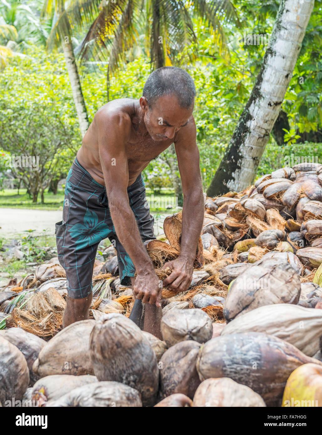 Man Peeling coco Photo Stock