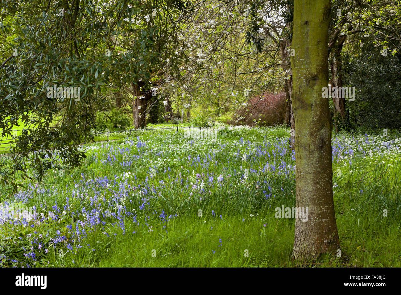 Jacinthes et fleurs de printemps dans le jardin inférieur en mai au ...