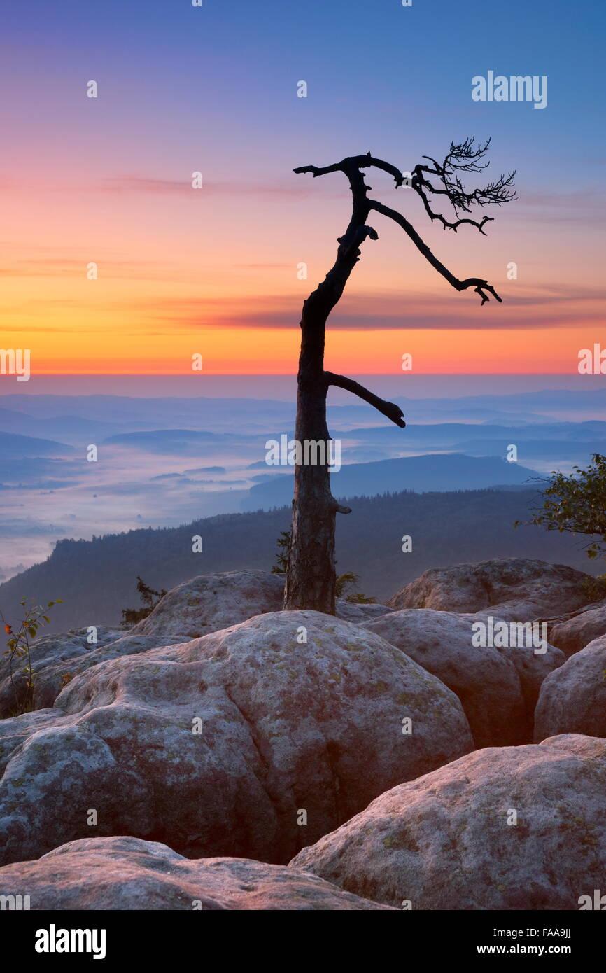 Seul arbre seul paysage à Szczeliniec Wielki Sudètes au lever du soleil, Parc National, Pologne Photo Stock
