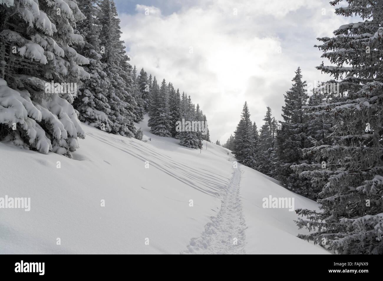Sentier de randonnée en raquettes dans les Alpes suisses entre les arbres. Eggberge, Canton d'Uri, en Suisse. Photo Stock