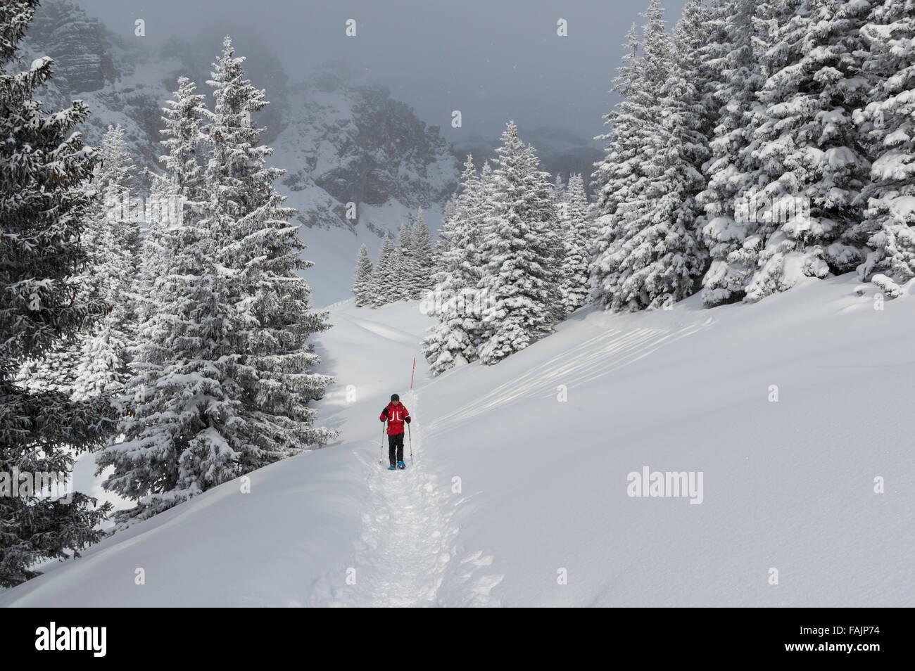Le randonneur sur un sentier dans les Alpes suisses entre les arbres. Eggberge, Canton d'Uri, en Suisse. Photo Stock