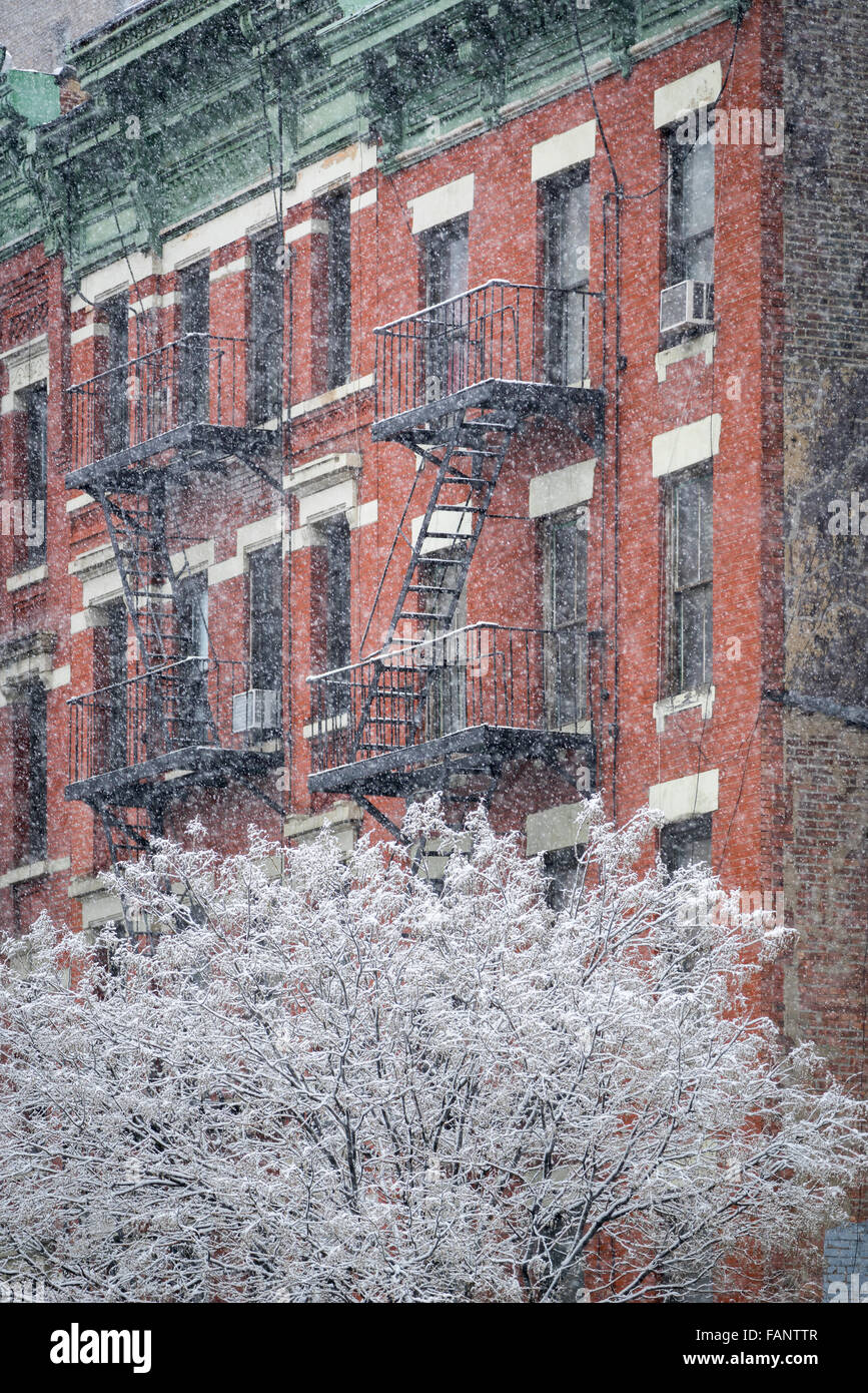 Arbre couvert de neige en face d'un bâtiment avec cuisine Hells fire échapper pendant une tempête de neige. Manhattan, New York en hiver Banque D'Images