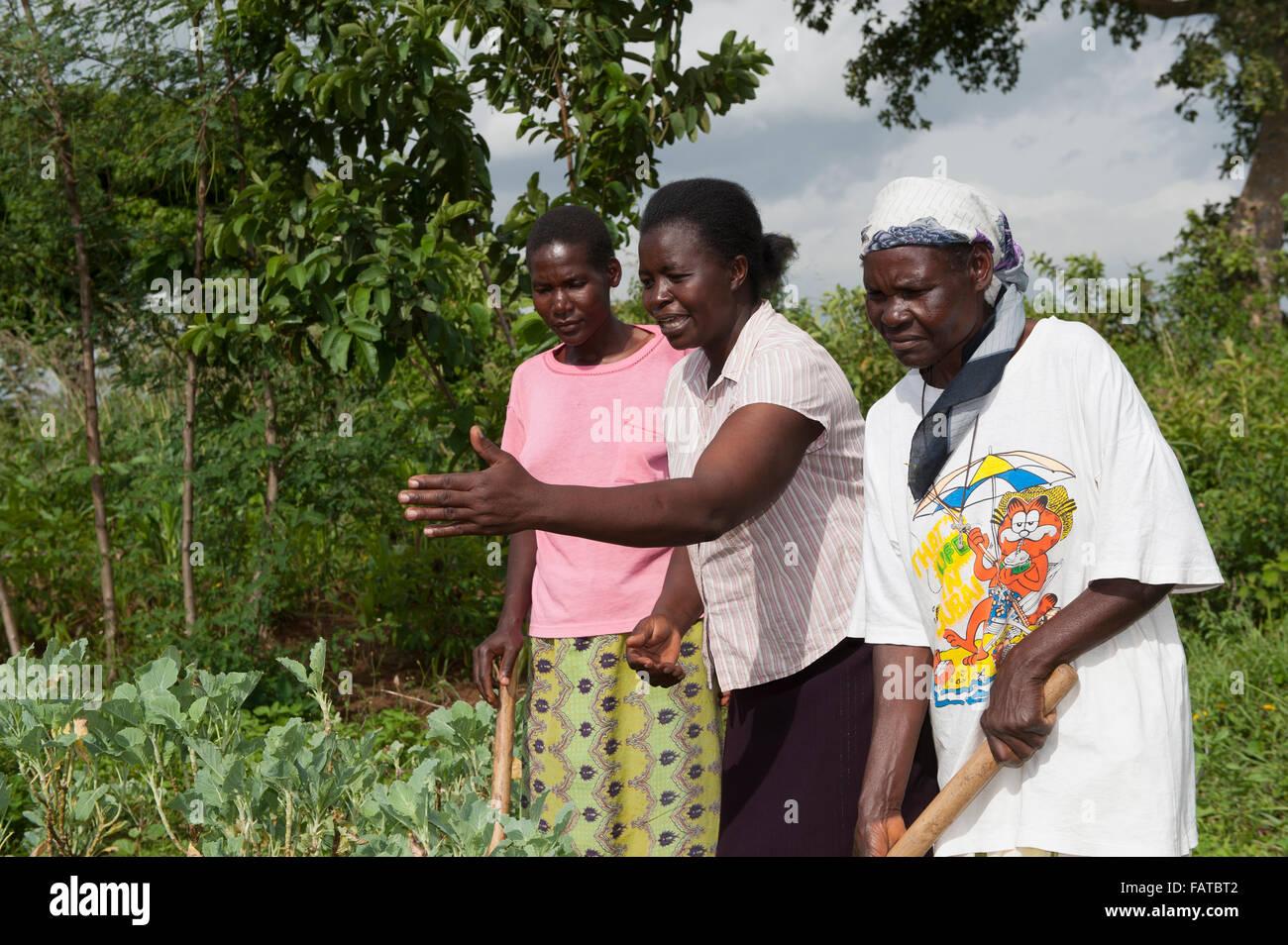 Deux agriculteurs étant donné des conseils par un expert agricole sur la meilleure façon de faire Photo Stock