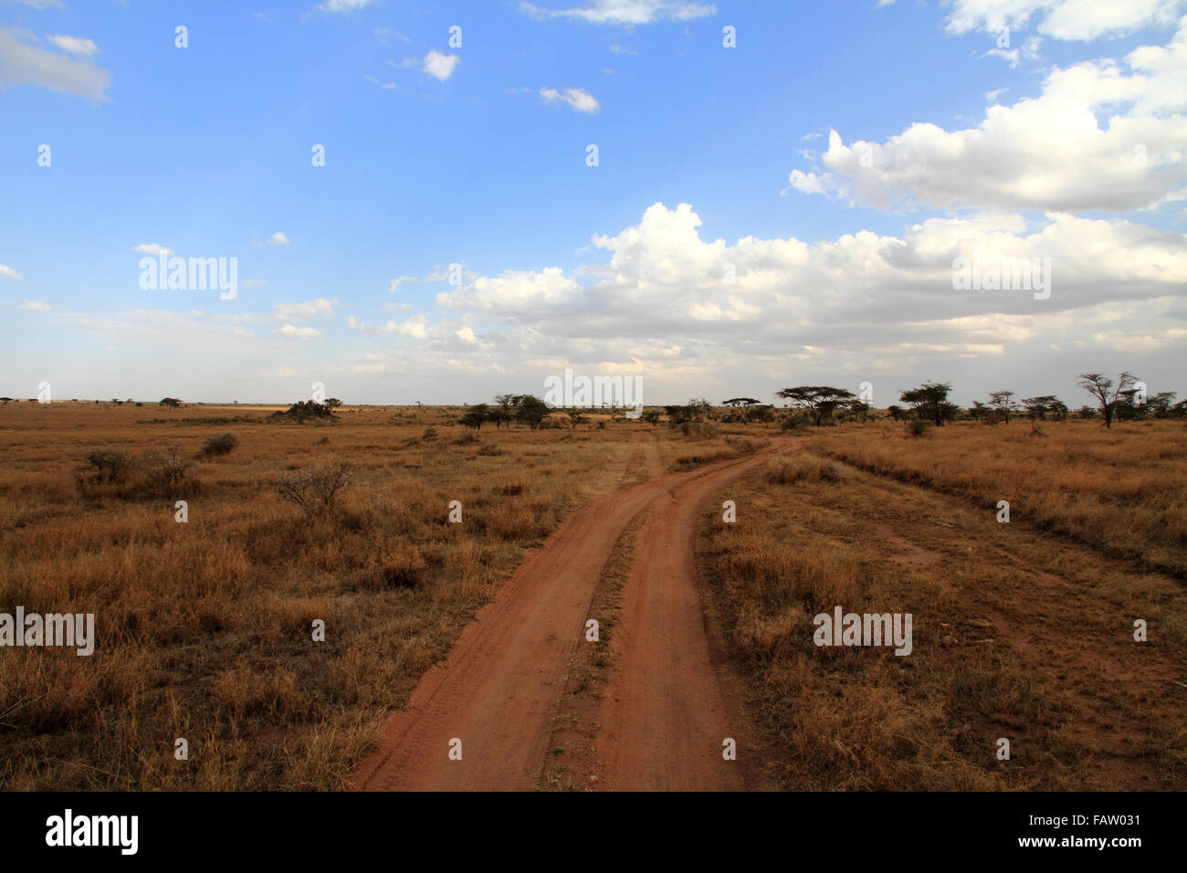 Un chemin de terre à travers le Serengeti Photo Stock