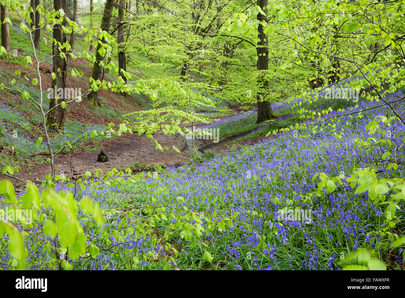Dix acres de bois; forêt de Dean; Printemps; UK Photo Stock