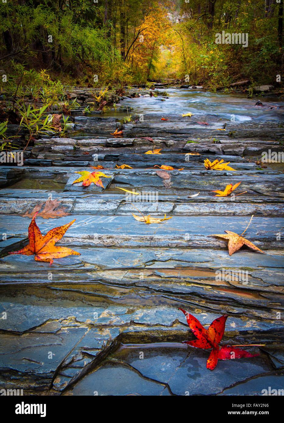 Les castors Bend State Park est un parc d'état de 1 300 acres situé près de Broken Bow, New York Photo Stock