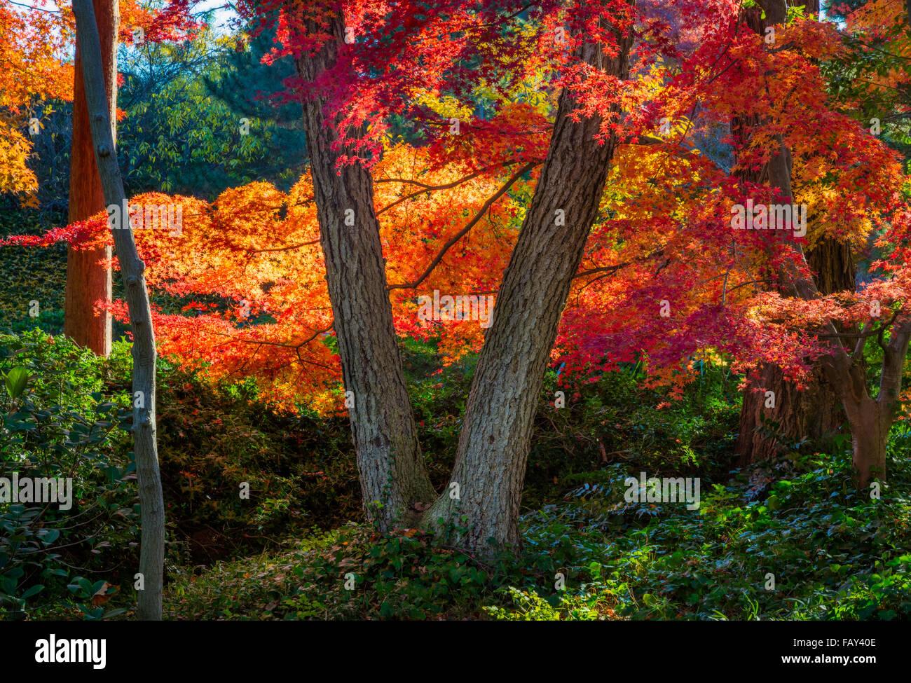 Le Fort Worth Japanese Garden est un jardin japonais 7,5 acres dans le Fort Worth (Texas) Botanic Garden Photo Stock