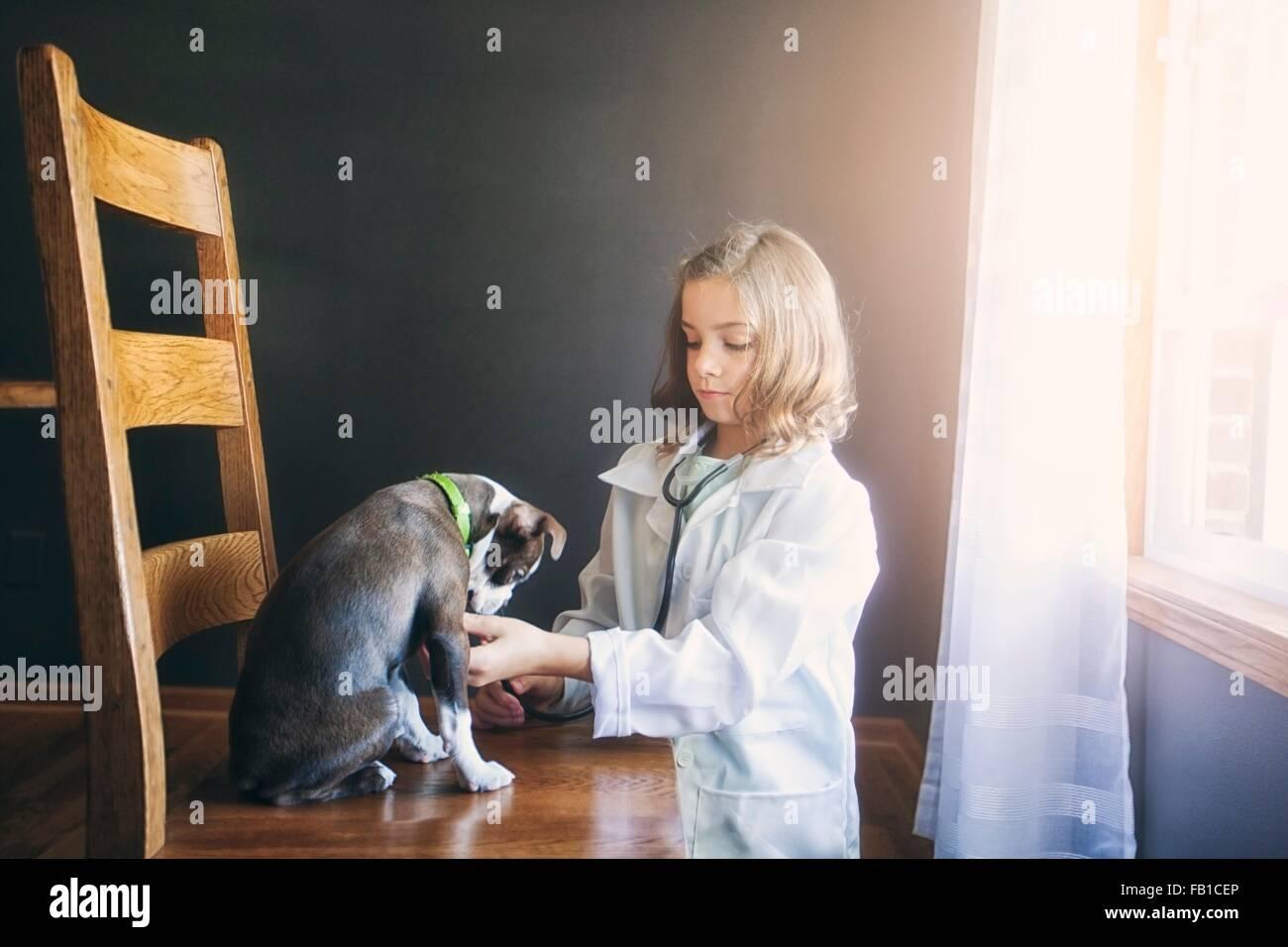 Fille habillé en médecin agenouillé tendant à Boston terrier puppy sitting on chair Photo Stock