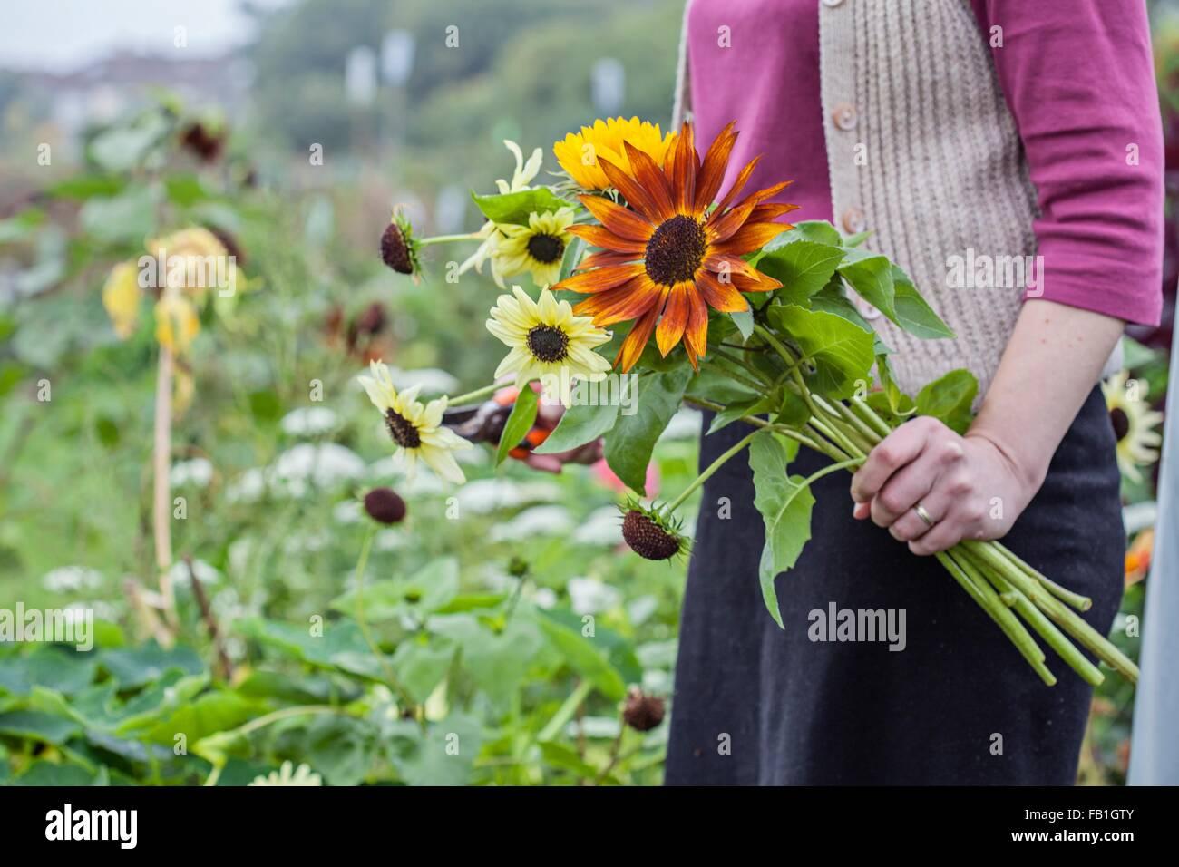 Portrait de femme à l'attribution des fleurs fraîches de coupe Photo Stock