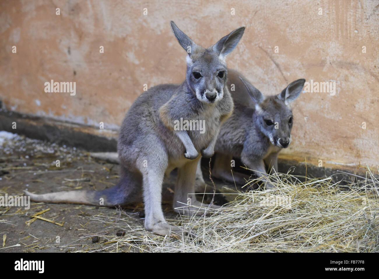 Left and her mother photos left and her mother images alamy