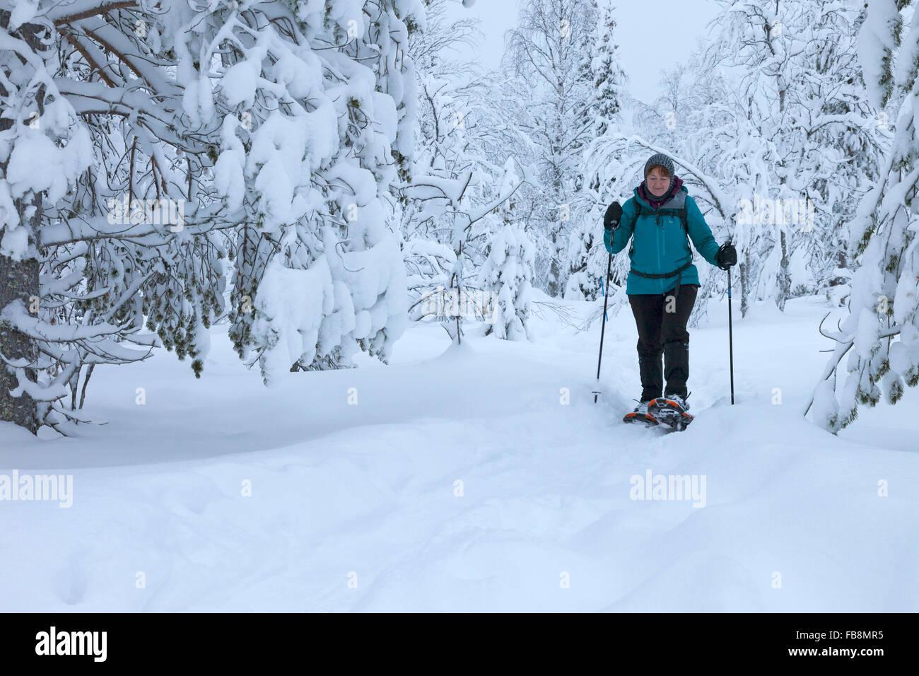 Female Hiker Raquette dans le Parc National de Pallas-Yllästunturi près de Yllas Laponie finlandaise en Photo Stock