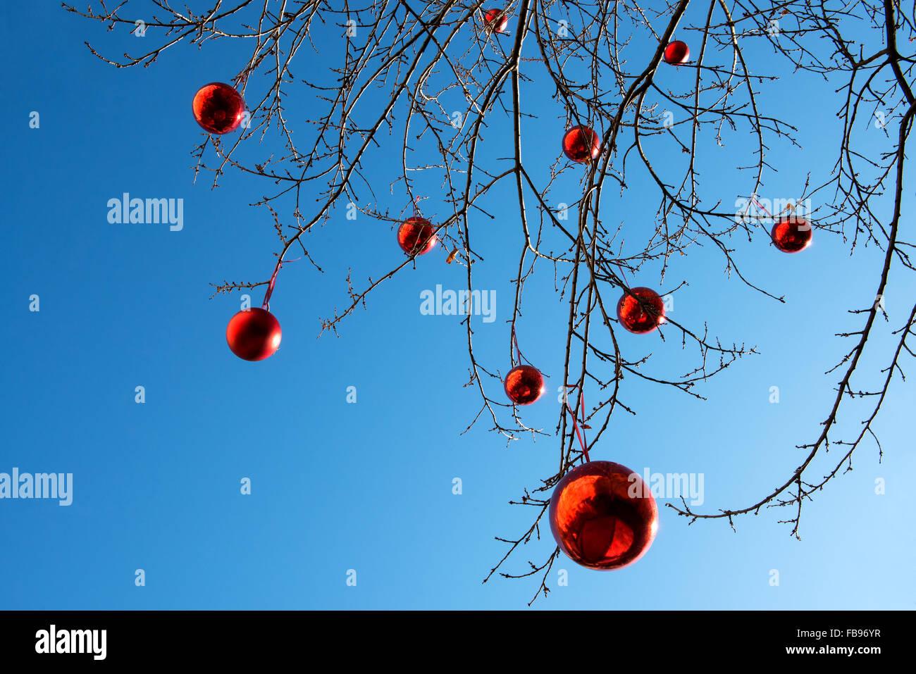 Boules de Noël rouge accroché sur les branches nues d'un arbre en plein air Photo Stock
