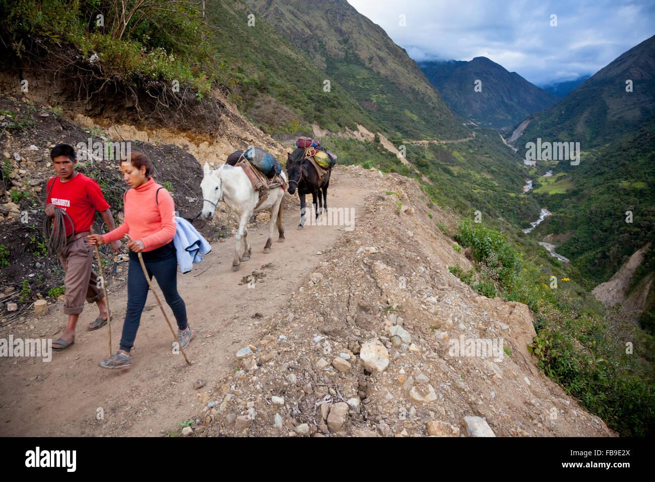 Arriero (muleskinner), mules et trek guide sur le Choquequirao (berceau de l'or) de l'Inca, le Pérou. Photo Stock