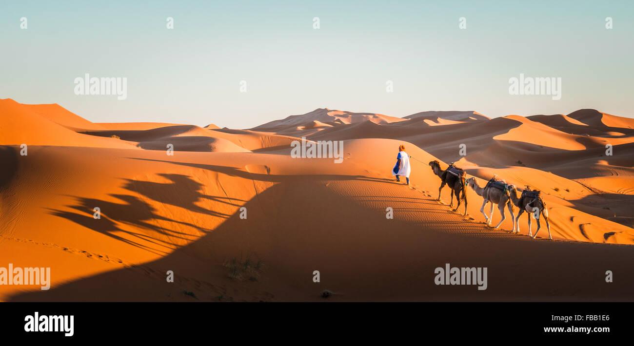 Chameau à travers les dunes du Sahara, l'Erg Chebbi Maroc Photo Stock
