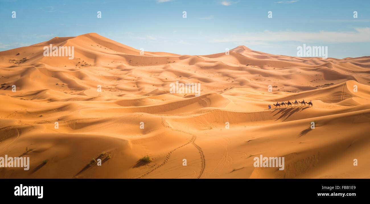 Chameau à travers les dunes du Sahara, l'Erg Chebbi Maroc Banque D'Images