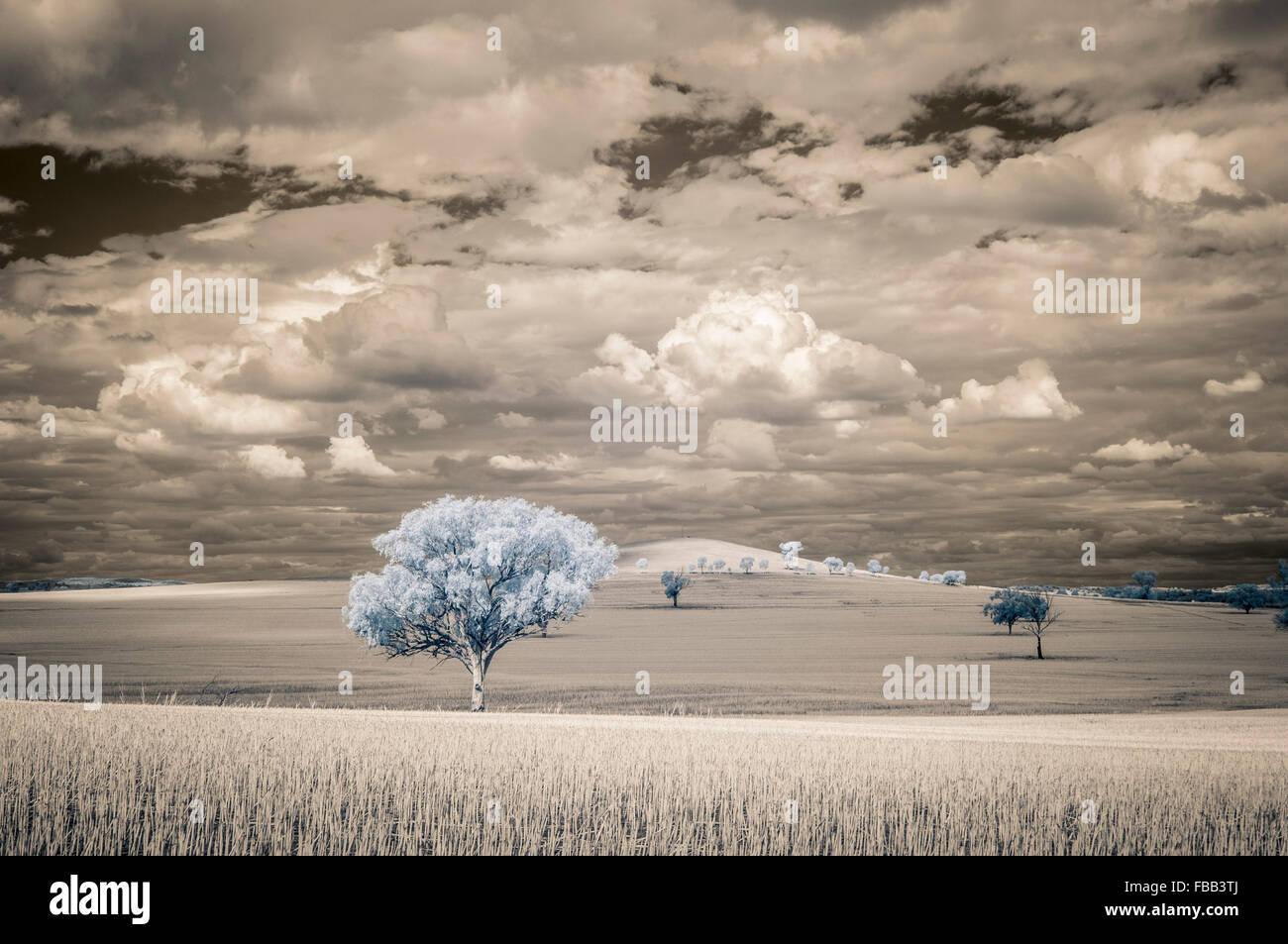 Terrain ensoleillé dans l'imagerie infrarouge, outback Nouvelle Galles du Sud, Australie Photo Stock