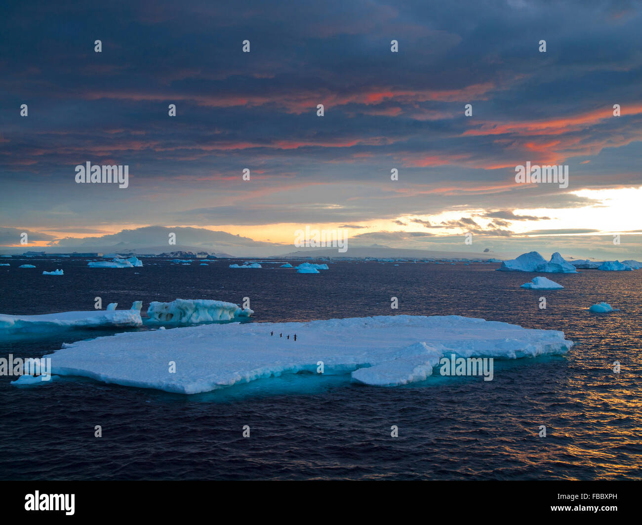 Sunrise, péninsule antarctique iceberg Photo Stock