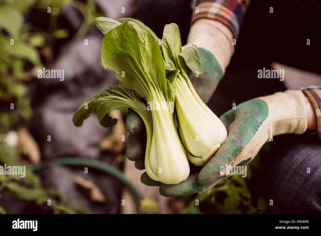 Man holding et montrant les légumes Photo Stock