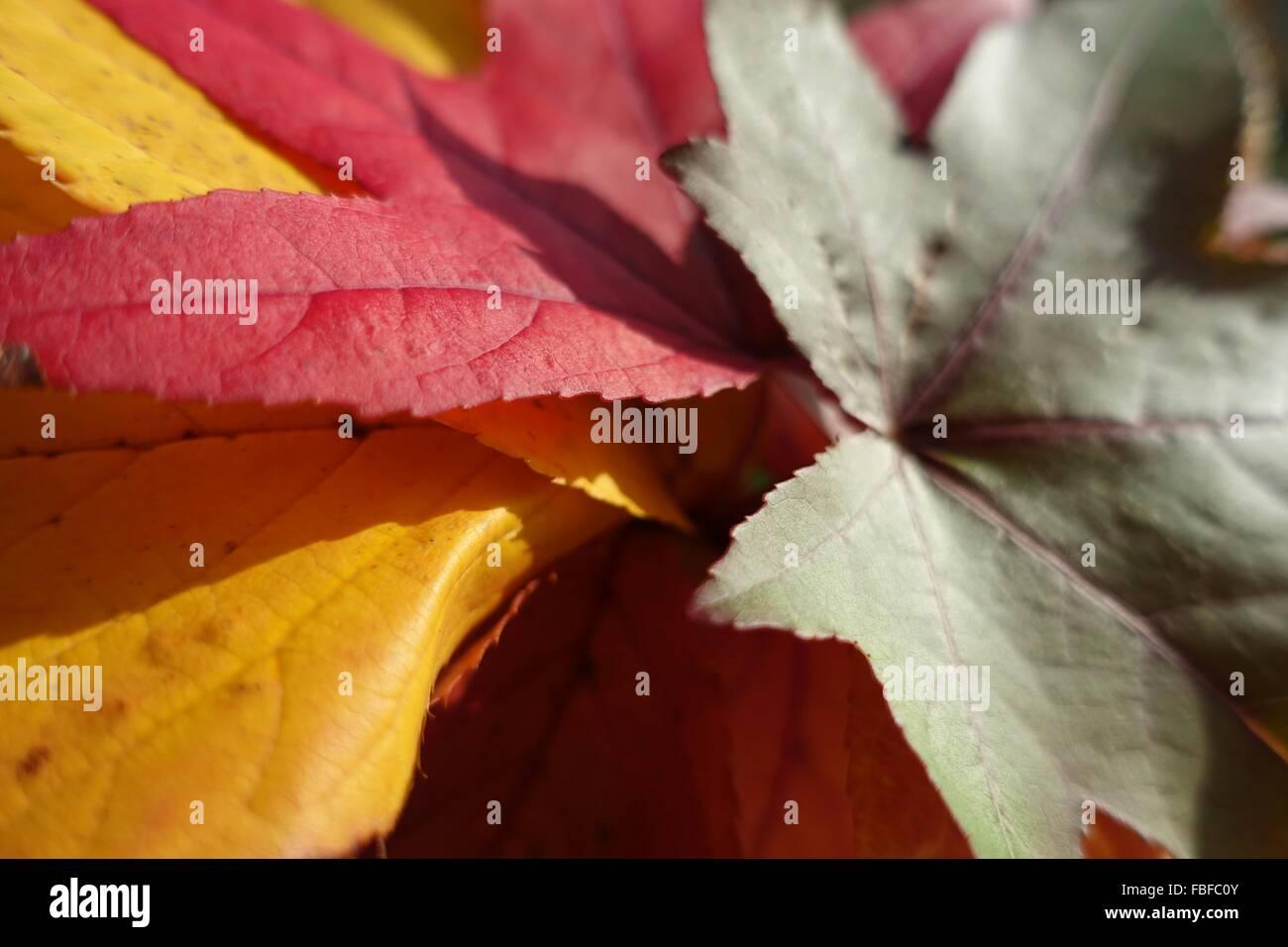 Plan de feuilles tombées au cours de l'automne Photo Stock