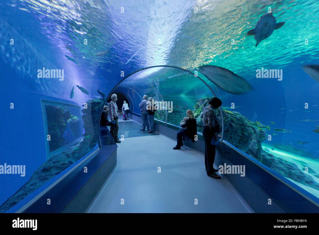 Tunnel, Den Blå Planet, Bleu Plante Aquarium, Copenhague, Danemark Photo Stock
