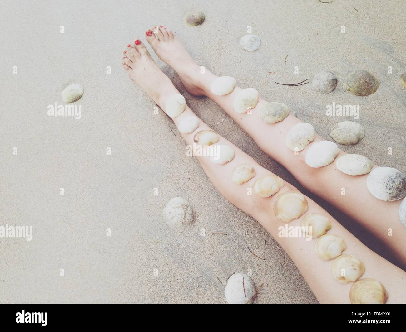 Coquillages sur une jambe Femme Photo Stock