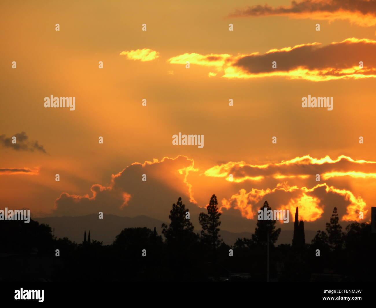 Silhouette des arbres contre le ciel Orange au coucher du soleil Banque D'Images