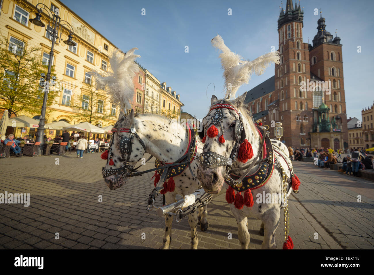 Cracovie, Pologne - 13 novembre 2015 : voitures à cheval à la place principale de Cracovie, en un Photo Stock