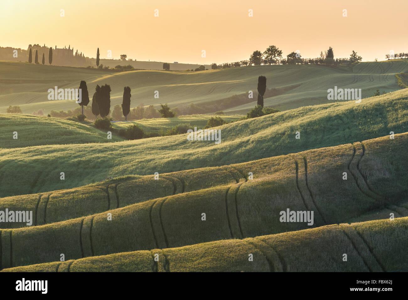 Coucher du soleil sur les champs d'été en Toscane Photo Stock