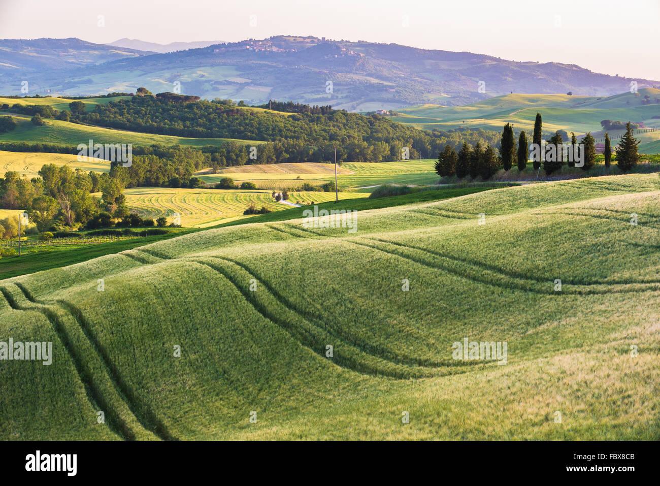 Champ d'été tranquille en Toscane Photo Stock