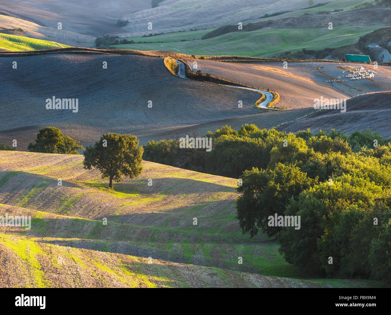 Le paysage toscan, parc national du Val d'Orcia, un site du patrimoine mondial de l'UNESCO Photo Stock