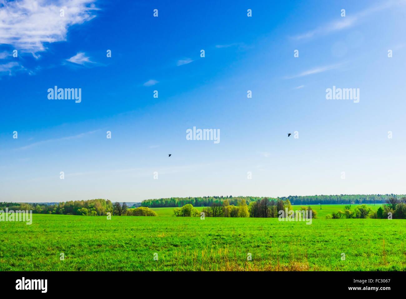 Paysage des prairies et du ciel Photo Stock