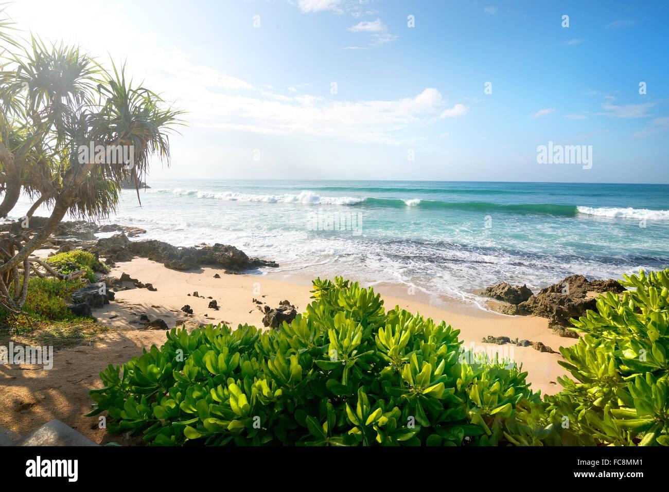 Plantes exotiques sur une plage de sable de l'océan indien Photo Stock