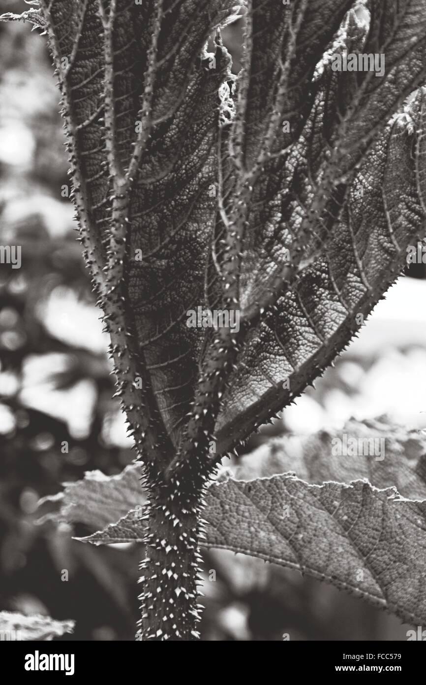 Plante épineuse de portrait Photo Stock